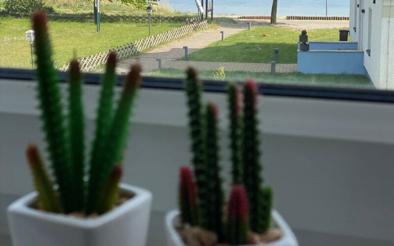 RügenGold Ferienwohnungen Dranske